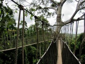 The Rainforest Experience Tour Packages