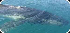 Whale Watching Tour Packages